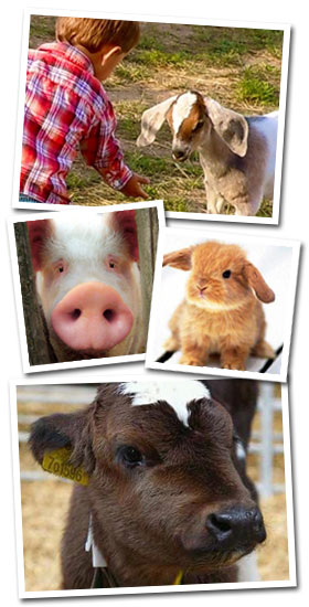 Barnyard Animals at Trunnell's Farm Market