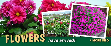 Hanging baskets, annuals, and vegetable plants at Trunnell's Farm Market